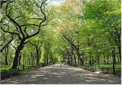 Free NYC Central Park Tours
